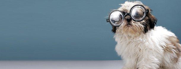 Interesse beim Flirtpartner wecken: Hund mit Brille