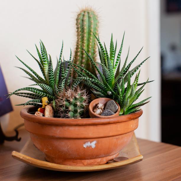 Single Peter hat eine Vorliebe für Pflanzen. Jetzt mehr lesen!